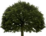 footer-tree-top