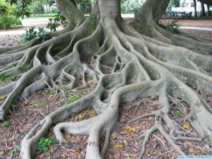 Tree Root Photo-1