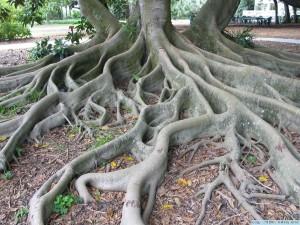 Tree Root Photo-1