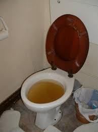 overflowing toilet Yuk!